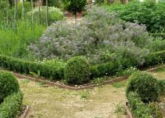 herbs-slades