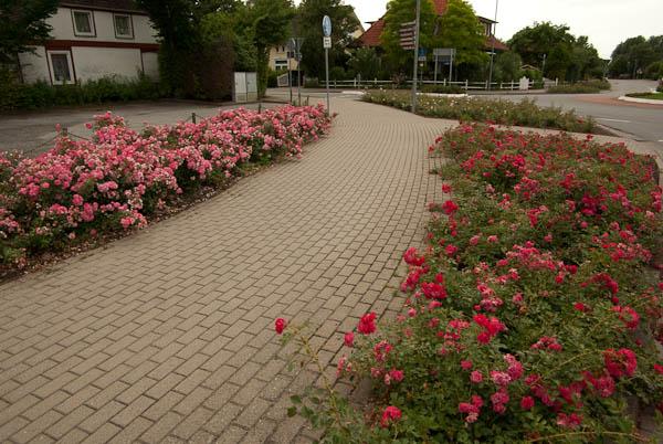 Rožės miesto erdvėje