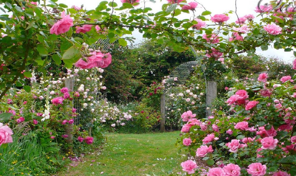 Rožėmis apželdinta arka