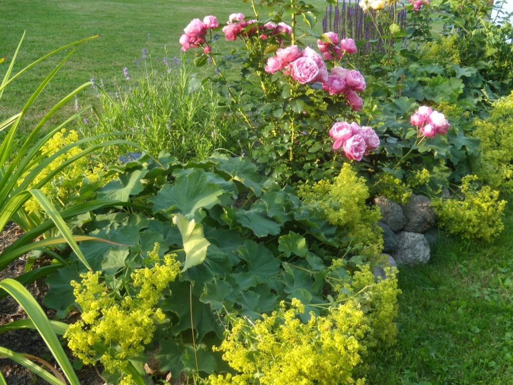 Rožės ir rasakilos